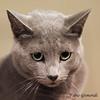 @ THE CONTEST (fabiogis50) Tags: cat cats gatti contest animals animal pet pets