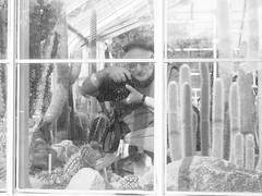 Cactus Shooter (mattwaller@ymail.com) Tags: seattle volunteerpark blackandwhitephotography blackandwhite bnw blackwhite bw monochrome urban city streetphotography street streetphotographers streetphoto streetlife cactus