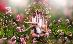 Roses yard (meriluu17) Tags: boudoir rose roses yard garden spring fairy fae babe chill fantasy pink