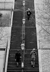 "PARIS F -  ""Montmartre upstairs"" (Fabrizio Lucchese 1') Tags: bw parigi paris montmartre francia france people persone scalinata scala stairs monocromo monochrome canon760d fabriziolucchese blancoynegro monocromatico blackwhite weissschwarz blackwite blackandwithe"