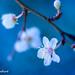 Spring Droplets of Hope