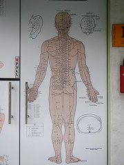 055/365: mapping the body (Michiko.Fujii) Tags: chinesemedicine anatomy thebody mappingthebody anatomicalstructures singapore door intriguingdoor anatomicaldrawing