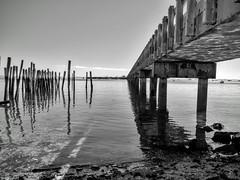 (mahler9) Tags: jaym october 2016 capecod provincetown pier coastguard piling harbor bw blackwhite