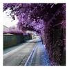 the purple street (benedictjones1) Tags: cl cheltenham colour color photoshop photography canon 35mm edit hue