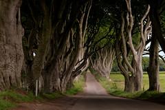 The Dark Hedges (lautxi) Tags: darkhedges trees landscape northernireland ireland gameofthrones