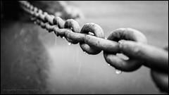 A chain of raindrops (G. Postlethwaite esq.) Tags: bw dof fujix100t macro barrier beyondbokeh blackandwhite bokeh chain closeup depthoffield monochrome photoborder raindrops selectivefocus fencefriday hff