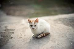 (Just A Stray Cat) Tags: 35mm 35 mm film analog analogue olympus mju ii kodak portra 400 kitty cat cats kittens gate bokeh bokehlicious gato