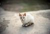 (ニノ Nino) Tags: 35mm 35 mm film analog analogue olympus mju ii kodak portra 400 kitty cat cats kittens gate bokeh bokehlicious gato
