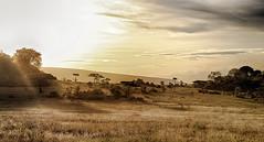 The Last Rays (AnyMotion) Tags: sunrays sonnenstrahlen evening abend morukopjes savannah savanna savanne landscape landschaft 2018 anymotion serengetinationalpark tanzania tansania africa afrika travel reisen nature natur 6d canoneos6d landschaftsaufnahmen