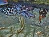 Spotted Moray Eel (Jwaan) Tags: spotted moray eel creature underwater fauna fish white brown teeth britishvirginislands bvi westindies caribbean ocean