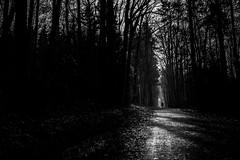 Alone in the woods (AlphaAndi) Tags: fullframe vollformat wow wald forest woods trier tiefenschärfe sony schwarzweis dof deepoffield leute people personen monochrome mono menschen menschenbilder sundaylights