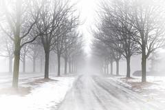 Tunnel Vision (Simon Hwang Photography) Tags: trees fog snow light nikond750