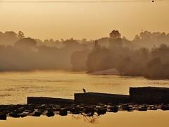lonesome bird - ave solitária (AnaValle) Tags: pássaro ave rio pordosol sunset river bird céu névoa nevoeiro árvore tree golden dourado água floresta animal fimdetarde paisagem portugal