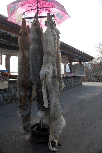 Fox and Wolf skins at Garni Temple