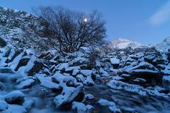 'Ogwen Moonlight' - Snowdonia (Kristofer Williams) Tags: twilight moonlight snow ice water river afonogwen ogwenvalley snowdonia wales cwmidwal nantffrancon landscape tree tryfan mountain