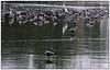 Winter (conrad.seegers) Tags: winter ijs meeuwen koud sittard stadsvijver vijver water