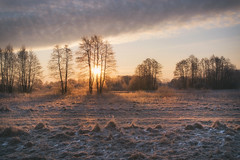 Quiet morning 2 (xkolba) Tags: sunrise sun rays outdoor mood podlasie february landscape winter frost tree trees canon70d ice grass sky field frozen warmlight snow meadow