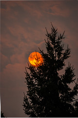 Obscura (Greenneck) Tags: redsunsmoke sun tree bellevue washington unitedstates us forestfire abstract
