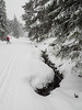 Snow is just frozen water 2 (flickrolf) Tags: snow white water dark skiing crosscountry tree trees winter
