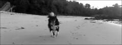 vilma_aguete_12_01_2018 (maxnemo) Tags: maxmemo maxnemo dog bordercollie beach playa praia morrazo can cane chien cadelo chuquel cadela femaledog