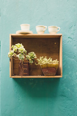 Succulents and cups (ninasclicks) Tags: succulent plants succulover cups wood wall planart1450 ze general