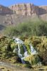 Band e Amir-(14).jpg (tobeytravels) Tags: afghanistan bande amir glaciallakes nationalpark hindu kushbalkh rivertravertinekohe baba