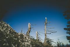 (c) Wolfgang Pfleger-8526 (wolfgangp_vienna) Tags: niederösterreich loweraustria austria österreich schneeberg schneebergland herbst autumn colorful bunt wald wiese blue blau blauerhimmel