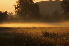 Sunrise (pszcz9) Tags: przyroda nature natura pejzaż landscape wschódsłońca sunrise łąka meadow mgła fog jesień autumn fall beautifulearth sony a77