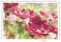 a garden full of flowers (charhedman) Tags: modernartaction graphicriver loveiswild experimentinginphotoshop spring flowers colourful text osho