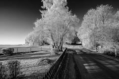 Frosty trees (++sepp++) Tags: bayern deutschland graben landscape landschaft landschaftsfotografie lechfeld rauhreif winter germany bavaria hoarfrost bäume trees sonnig sunny