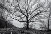 The Guardian Tree... (Ody on the mount) Tags: albtrauf anlässe bäume em5ii fototour mzuiko918 omd olympus pflanzen schwäbischealb silhouette bw monochrome sw trees