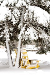 Waiting for Summer (Karen_Chappell) Tags: tree snow yellow white winter chair city urban downtown stjohns canada atlanticcanada avalonpeninsula eastcoast newfoundland nfld chairs