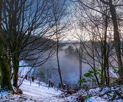_DSC3389-00044.jpg (daveguzzer) Tags: unitedkingdom scotland lanarkshire uk ukhighlandandislands winterr sonya65 trees snow