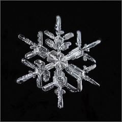 Snowflake (Margo Dolan) Tags: macro ringflash snowflake winter snow blackandwhite monochrome beauty artistic focusstacking dof