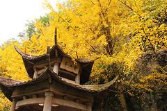 象山公園 (aaaaa1903) Tags: kweilin 桂林 象山公園 象鼻山 會江亭 銀杏