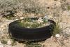 Desert Planter (W9JIM) Tags: california unitedstates w9jim tire abandoned dvnp deathvalley keelermine planter plants 7d2 24105l
