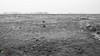 overwinteren (v a n d e r l a a n . fotografeert) Tags: 169 201802100355 fujixt1 fujifilm fujinonxf35mmf14r groningerlandschap noordlaarderbos noordlaren oostpolder ganzen geese landscape landschap polder polderland winter