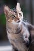 DSC00375 (RamaWangFlickr) Tags: 貓 cat neko gato 阿比 sonya7 contaxcarlzeisssonnar18028t