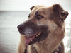 [02/12 Candor loves holidays ] (frau_k) Tags: 02 12 12monthfordogs candor k holidays föhr beach strand north sea