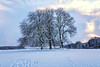The Tree Sisters (Habitualmurph) Tags: snow ireland kildare thecurragh canon70d end days