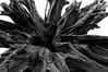 can't find a title... (Kirmatic) Tags: sony nex6 sigma 19 ex dn art stump stock bole dead tree black white