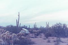 Boondocking outside of Tucson (wrenee.com) Tags: 2017 35mm 800 film canonae1 cinestill800t december saguaro tucson arizona saguaronationalpark desert 800t cinestill westfalia vanagon vanlife pakonf135
