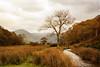 Cumbria (maureen bracewell) Tags: lakedistrict autumn landscape mist mountain stream trees england uk cumbria crummockwater walking bridge clouds nature lake texture maureenbracewell cannon diamondclassphotographer flickrdiamond