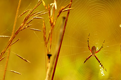 """:*: Home on the web :*: (Darrell Colby """" You Call The Shots """") Tags: spider home web siderweb londonontario ontario canada darrellcolby"""
