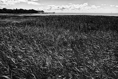 Légère brise (Fabrice Denis Photography) Tags: grass france noiretblanc bwphotography landscape charentemaritime coastalphotography seascapes blackandwhitephotos monochromephotography seascapephotography monochrome landscapephotography nouvelleaquitaine sea cabanedepêcheurs blackandwhitephotographer ocean blackandwhitephotography talmontsurgironde herbes coastal oceanphotography blackandwhite paysage seascapephotographer landscapephotos seascapephotos carrelets fr