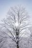 light and tree (peaceful-jp-scenery (busy)) Tags: sony cybershot dscrx100m3 carlzeiss 2470mmf1828 20mp nekoma ski resort urabandai tohoku 猫魔スキー場 裏磐梯 東北 福島 日本