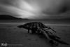 old stumpy (Aaron_Smith_Wolfe_Photography) Tags: storm beach sandharbor sierranevada laketahoe blackandwhite tree stump