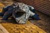 De un bocado (SantiMB.Photos) Tags: 2blog 2tumblr 2ig vitoria gasteiz euskadi cocodrilo gorrión sparrow crocodile parque park escultura sculpture geo:lat=4284521644 geo:lon=267823666 geotagged vitoriagasteiz paisvasco españa esp
