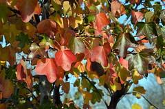 FallAlongGreenway (T's PL) Tags: alonggreenway d7000 fallcolor fallleafs nikon nikond7000 nikondslr nikontamron roanoke roanokeva tamron tamron16300mm tamron16300mmf3563diiivcpzdmacro tamron16300mmf3563diiivcpzdmacrob016 tree va virginia
