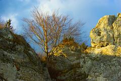 336  I grow on a rocky ground (Hejma (+/- 5400 faves and 1,7 milion views)) Tags: skały wapienne drzewa krzewy ciemne chmury światłocień